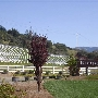 Breggo Winery and Vineyards, Anderson Valley